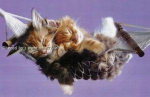 https://einfachen.files.wordpress.com/2010/11/these_funny_animals_531_640_04.jpg?w=300
