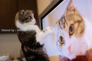 https://einfachen.files.wordpress.com/2010/11/these_funny_animals_531_640_15.jpg?w=300